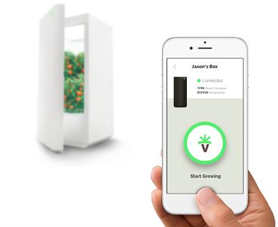 Những công nghệ trồng rau sạch kiểu mới - ảnh 1