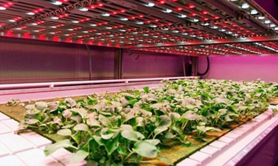 Những công nghệ trồng rau sạch kiểu mới - ảnh 2