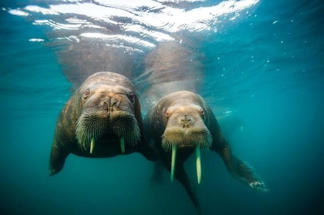 Các bức ảnh về biển ấn tượng trong Ngày Đại dương Thế giới - ảnh 2