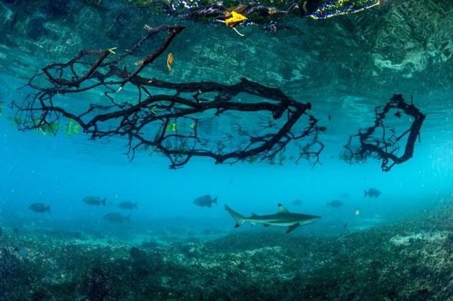 Các bức ảnh về biển ấn tượng trong Ngày Đại dương Thế giới - ảnh 6