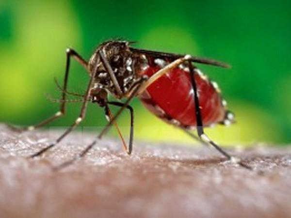 Phát hiện một loạt hoạt chất có tác dụng kháng virus Zika - ảnh 1