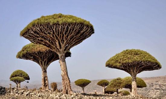 Những phong cảnh kỳ lạ nhất trên Trái Đất - ảnh 1