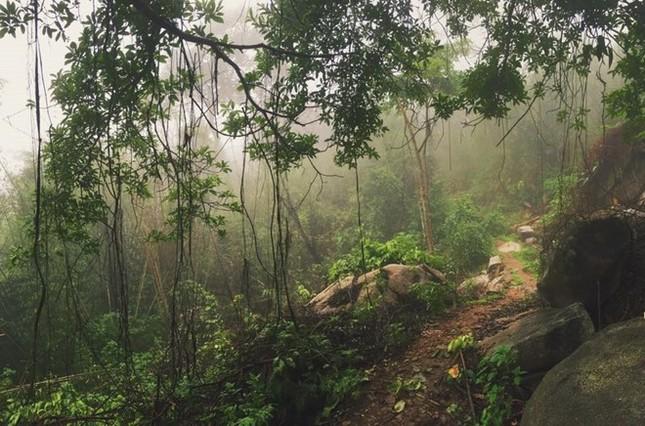 Trekking núi Chứa Chan ngày sương mù - ảnh 2