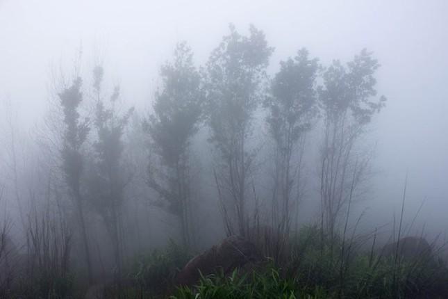Trekking núi Chứa Chan ngày sương mù - ảnh 4