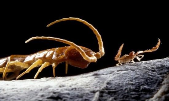 Những sinh vật lạ trong hang đầy khí độc 5,5 triệu năm - ảnh 1