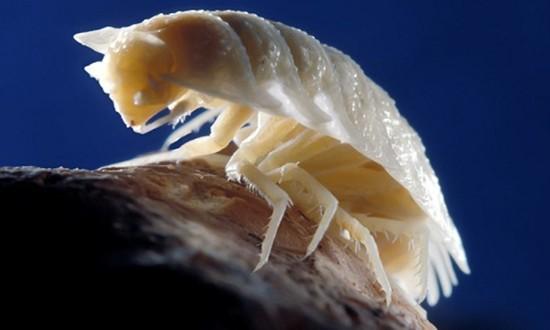 Những sinh vật lạ trong hang đầy khí độc 5,5 triệu năm - ảnh 2