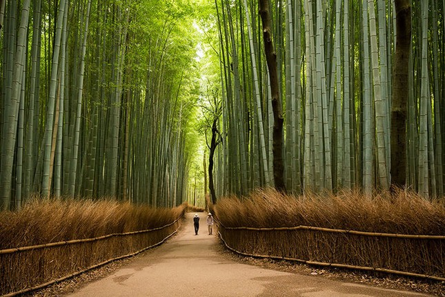 15 lý do khiến bạn muốn đi Nhật ngay lập tức - ảnh 1