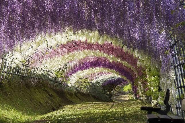15 lý do khiến bạn muốn đi Nhật ngay lập tức - ảnh 2