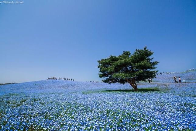 15 lý do khiến bạn muốn đi Nhật ngay lập tức - ảnh 3