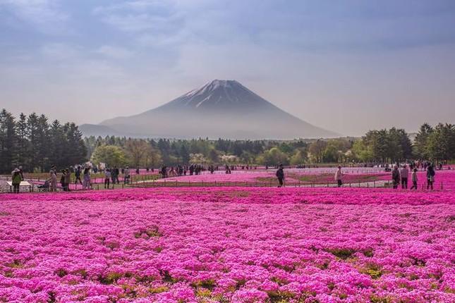15 lý do khiến bạn muốn đi Nhật ngay lập tức - ảnh 4