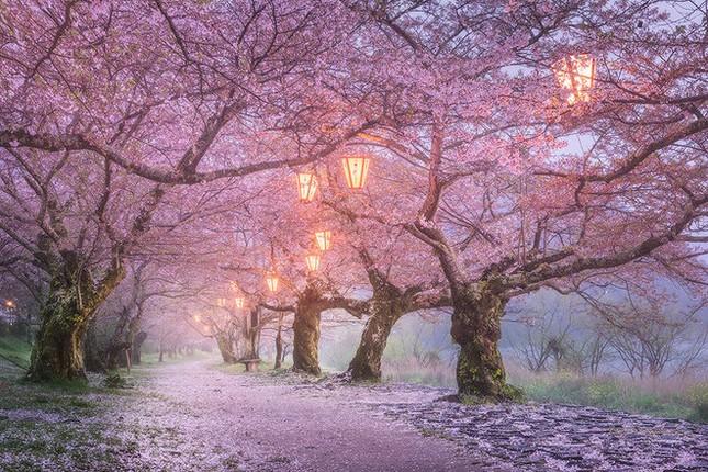 15 lý do khiến bạn muốn đi Nhật ngay lập tức - ảnh 10