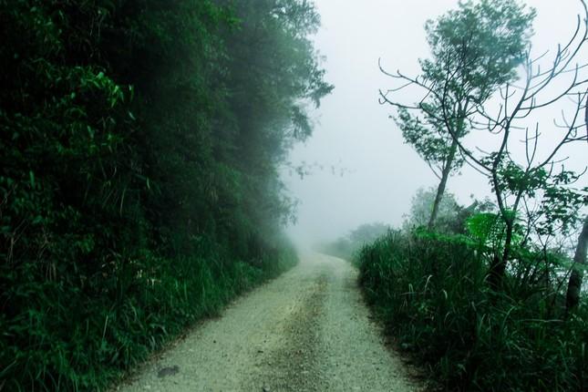 Vẻ đẹp đầy ma mị của Vườn quốc gia Tam Đảo - ảnh 3
