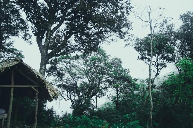 Vẻ đẹp đầy ma mị của Vườn quốc gia Tam Đảo - ảnh 5