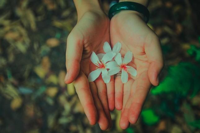 Vẻ đẹp đầy ma mị của Vườn quốc gia Tam Đảo - ảnh 9