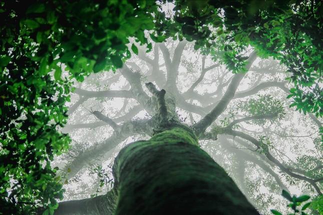 Vẻ đẹp đầy ma mị của Vườn quốc gia Tam Đảo - ảnh 10