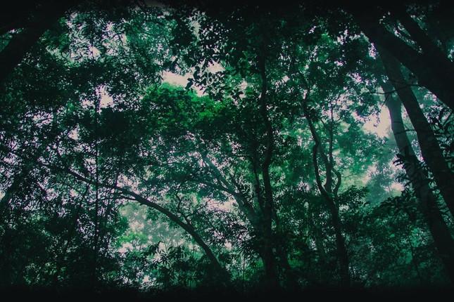 Vẻ đẹp đầy ma mị của Vườn quốc gia Tam Đảo - ảnh 11