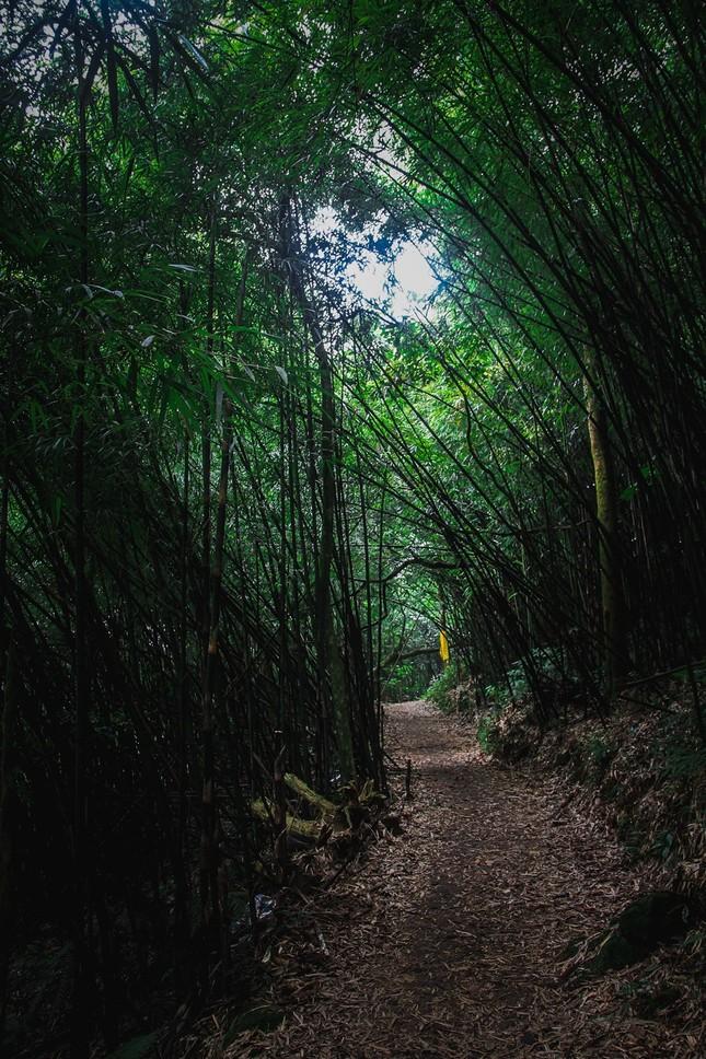 Vẻ đẹp đầy ma mị của Vườn quốc gia Tam Đảo - ảnh 6