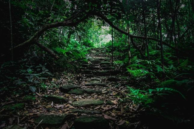 Vẻ đẹp đầy ma mị của Vườn quốc gia Tam Đảo - ảnh 7