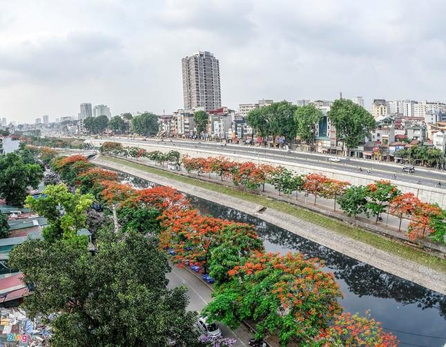 Hoa phượng đỏ rực rỡ khắp Hà Nội - ảnh 1