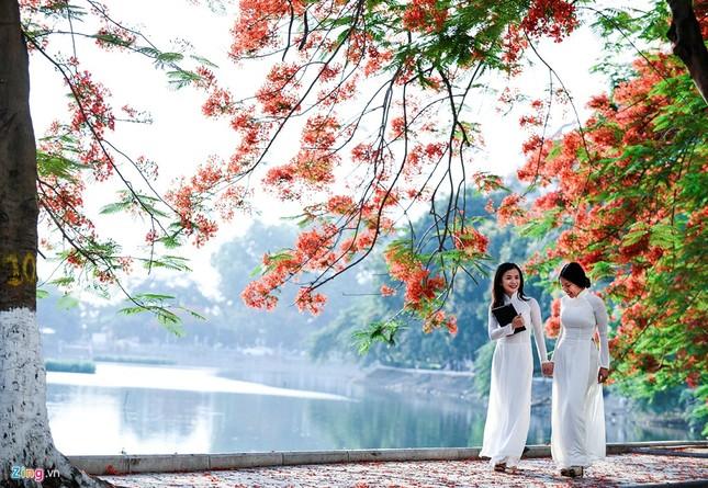 Hoa phượng đỏ rực rỡ khắp Hà Nội - ảnh 6
