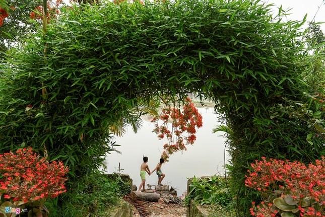 Hoa phượng đỏ rực rỡ khắp Hà Nội - ảnh 12