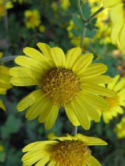 Những loài hoa có độc tính mạnh nhất trong tự nhiên - ảnh 5