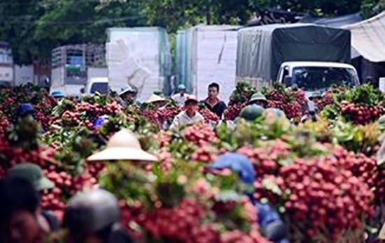 Trái cây Việt hướng vào thị trường 'khó tính' - ảnh 1
