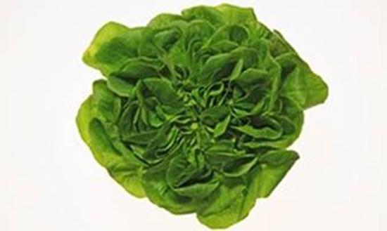 Phát triển sản xuất thực phẩm bằng giải pháp kỹ thuật số - ảnh 2