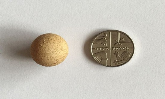 Trứng gà nhỏ nhất thế giới bé hơn đồng xu - ảnh 1