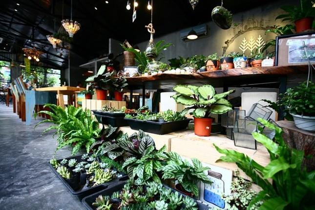 Quán cà phê ngập tràn cây xanh ở Hà Nội - ảnh 7