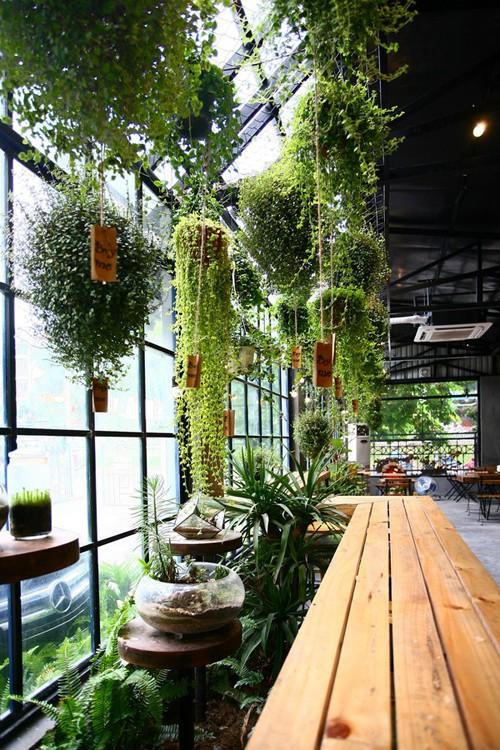 Quán cà phê ngập tràn cây xanh ở Hà Nội - ảnh 8