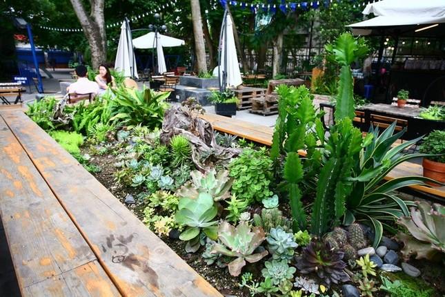 Quán cà phê ngập tràn cây xanh ở Hà Nội - ảnh 10