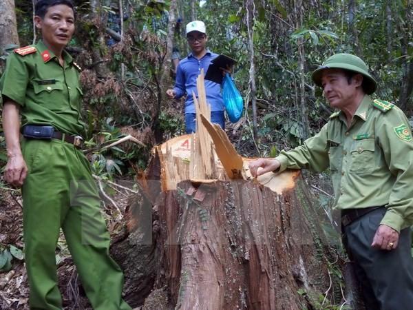 Tạm đình chỉ công tác Chi cục trưởng Hải quan cửa khẩu Nam Giang - ảnh 1