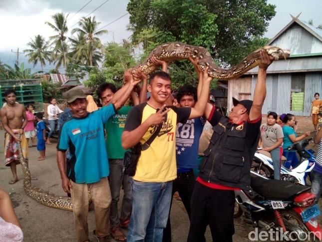 Người dân Indonesia bắt được con trăn khổng lồ dài 8m - ảnh 1