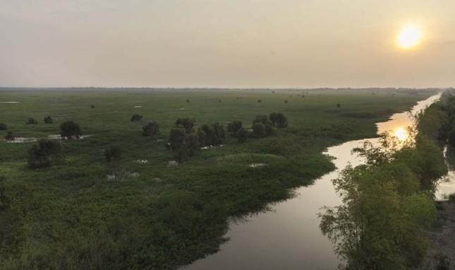 Sếu đầu đỏ bỏ Việt Nam sang Campuchia - ảnh 3