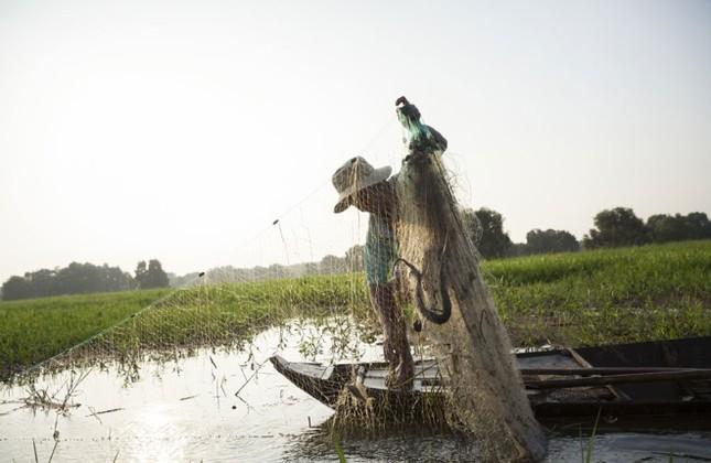 Sếu đầu đỏ bỏ Việt Nam sang Campuchia - ảnh 4