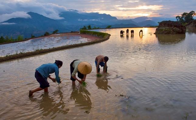 Tuyệt tác ruộng bậc thang Hoàng Su Phì mùa nước đổ - ảnh 9