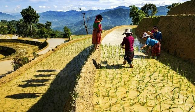 Tuyệt tác ruộng bậc thang Hoàng Su Phì mùa nước đổ - ảnh 10