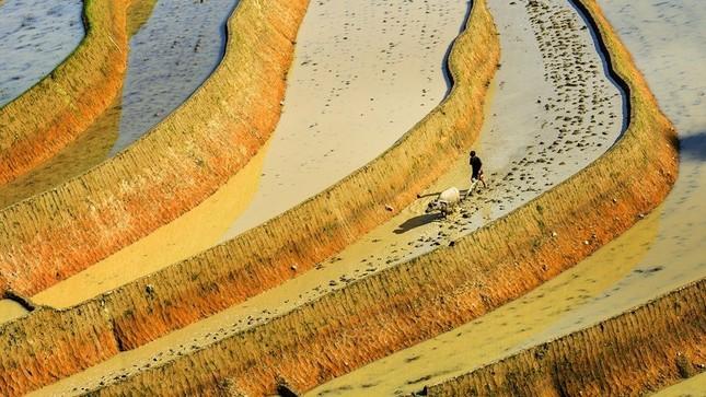 Tuyệt tác ruộng bậc thang Hoàng Su Phì mùa nước đổ - ảnh 12