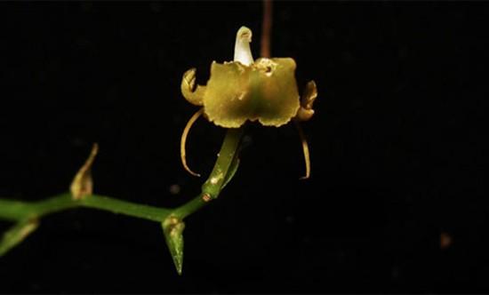 13 loài lan ở khu bảo tồn thiên nhiên Hòn Bà - ảnh 8