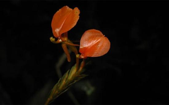 13 loài lan ở khu bảo tồn thiên nhiên Hòn Bà - ảnh 12