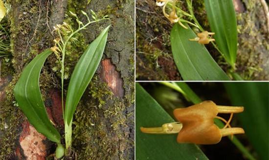 13 loài lan ở khu bảo tồn thiên nhiên Hòn Bà - ảnh 6