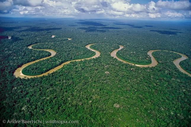 Cần 300 năm để hoàn thành thống kê thực vật rừng Amazon - ảnh 1