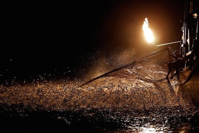 Màn đánh cá bằng lửa đẹp mê hoặc ở Đài Loan - ảnh 1
