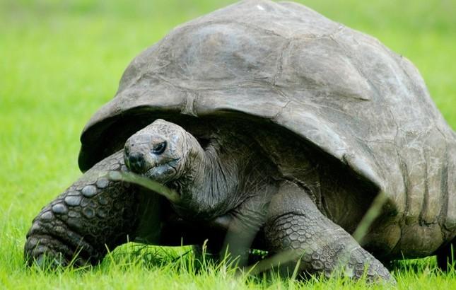 Những động vật sống thọ nhất trong thế giới tự nhiên - ảnh 5
