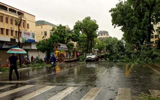 Bão số 1 càn quét ở Hà Nội, cây cối đổ la liệt - ảnh 2