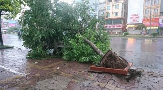Bão số 1 càn quét ở Hà Nội, cây cối đổ la liệt - ảnh 4