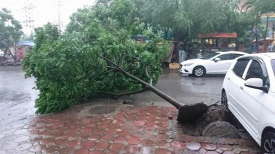Bão số 1 càn quét ở Hà Nội, cây cối đổ la liệt - ảnh 5