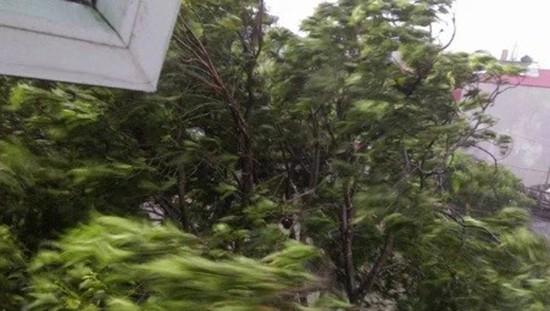 Bão số 1 càn quét ở Hà Nội, cây cối đổ la liệt - ảnh 6