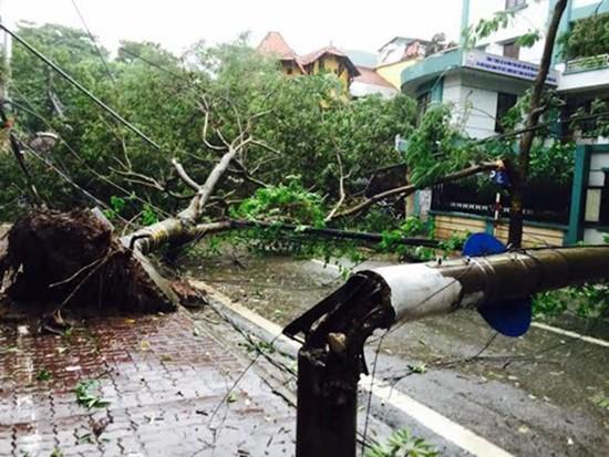 Bão số 1 càn quét ở Hà Nội, cây cối đổ la liệt - ảnh 7